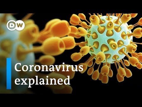 Coronavirus explained: Where it came from and how to stop it | DW News