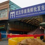 The coronavirus likely traveled 800 miles to Wuhan from farms that breed wild animals for food, a WHO report found